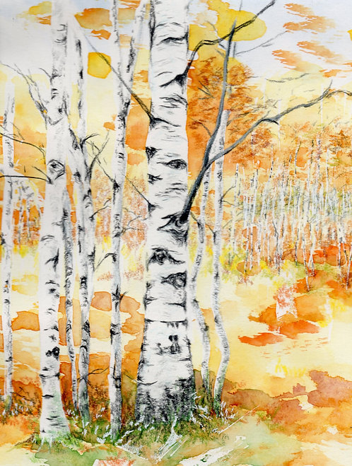 Blank card of Silver Birches. Print of original painting by Sarah Caisey