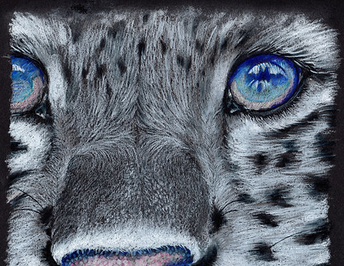 Print of original drawing of a Snow Leopard by Sarah Caisey