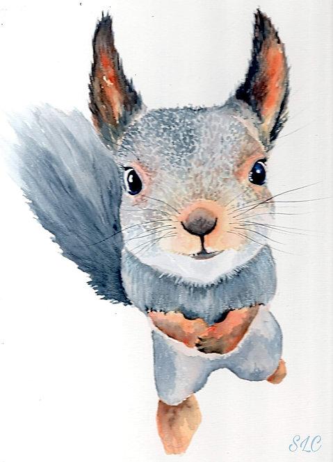 Squirrel blank card
