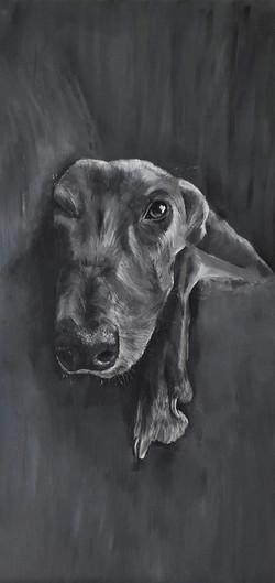Greyhound on sofa