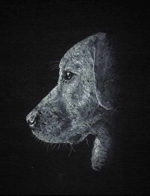 Blank card. White Labrador. Print of original painting by Sarah Caisey
