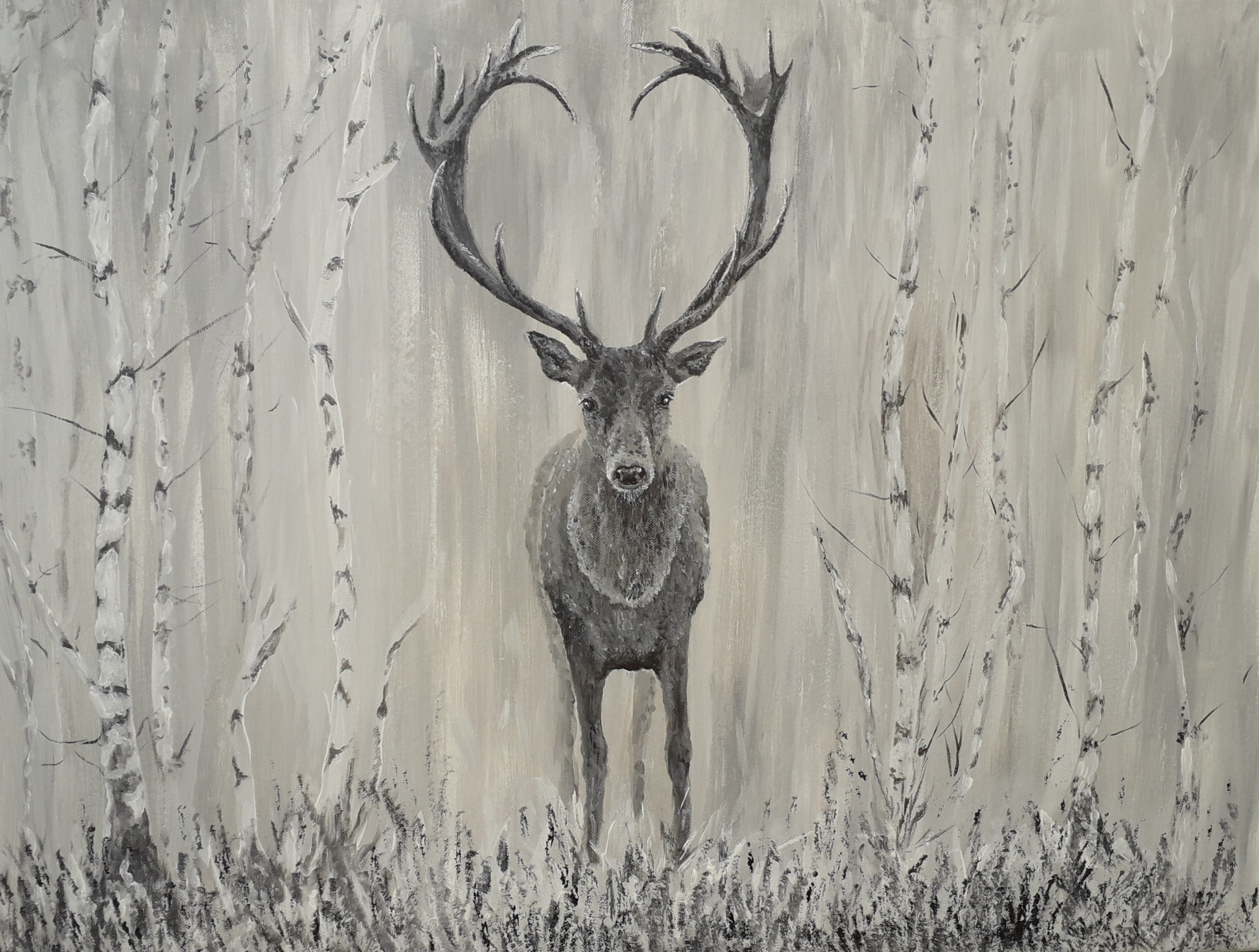Stag in silver birches