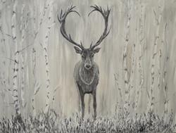 Stag in silver birches