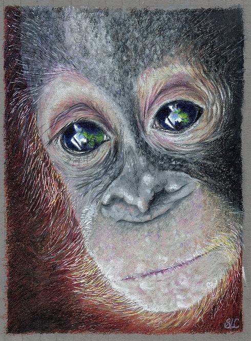 Print of an original drawing of an Orangutan by Sarah Caisey