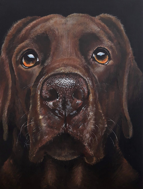 Blank card of a Chocolate Labrador. Print of original painting by Sarah Caisey