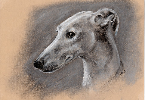 Print of pastel drawing of a Greyhound by Sarah Caisey