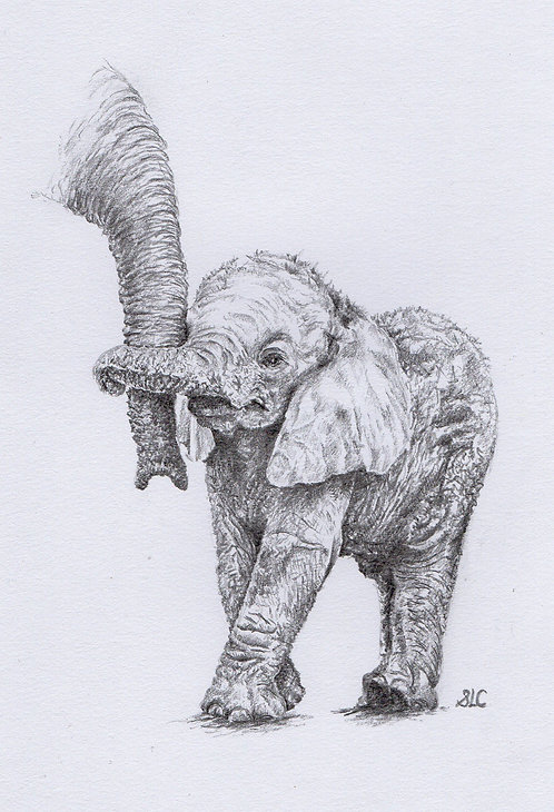 Print of original drawing of a baby elephant holding a trunk by Sarah Caisey