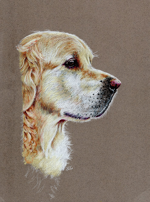 Blank card. Golden Retriever. Print of drawing by Sarah Caisey