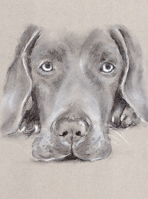 Blank Card. Great Dane. Print of drawing by Sarah Caisey