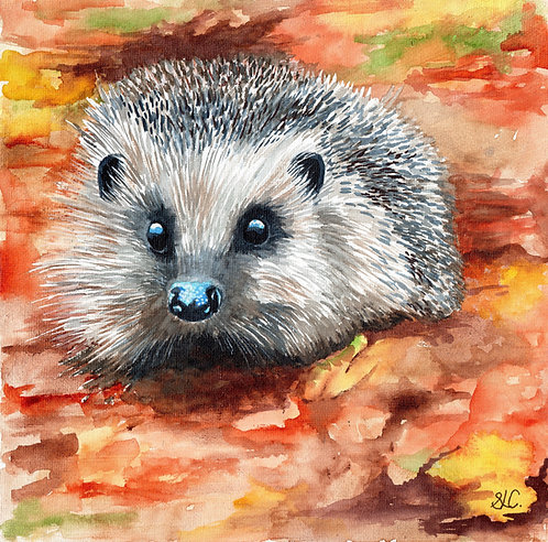 Hedgehog blank card