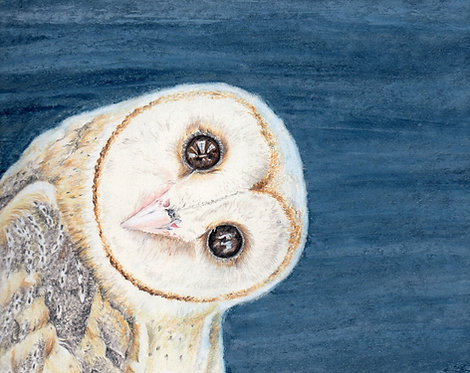 Bank card. Curious owl. Print of drawing by Sarah Caisey