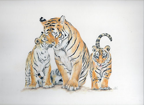 Tiger family blank card. Print of my original drawing