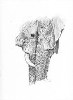 Elephant couple