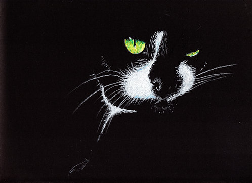 Blank card. Black and white cat. Print of original drawing by Sarah Caisey