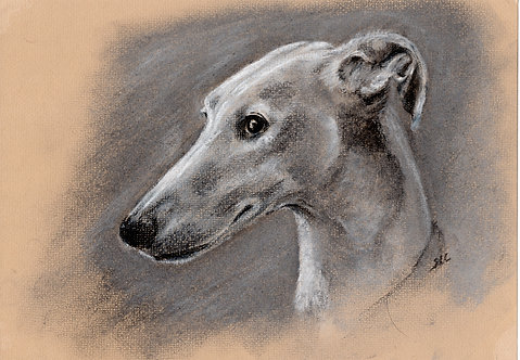 Blank card. Greyhound. Print of drawing by Sarah Caisey