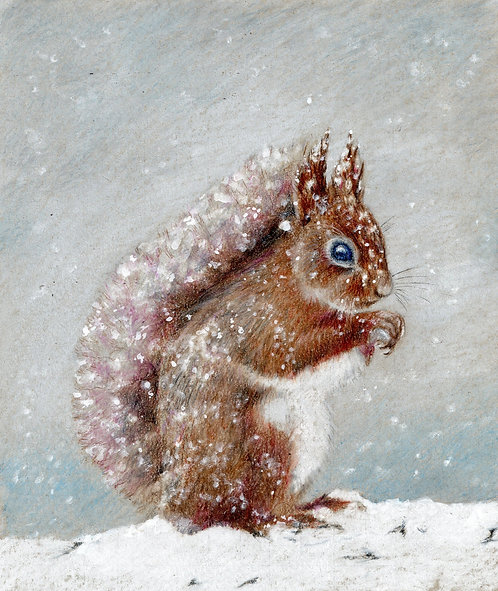 Red Squirrel card. Print of my original drawing