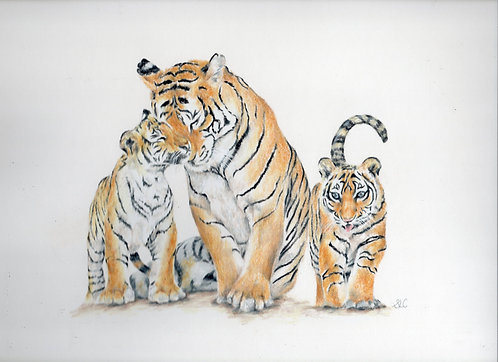 Print of an original drawing of a family of Tigers by Sarah Caisey
