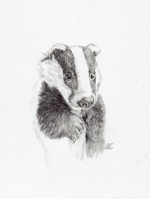 Print of a drawing of a badger cub by Sarah Caisey