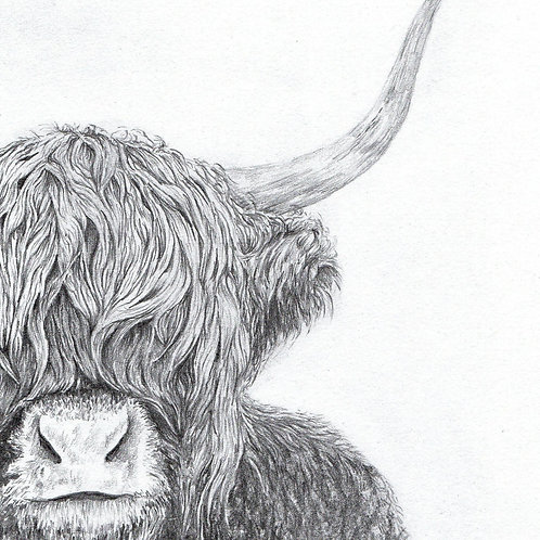 Print of original drawing of a Highland Coo by Sarah Caisey