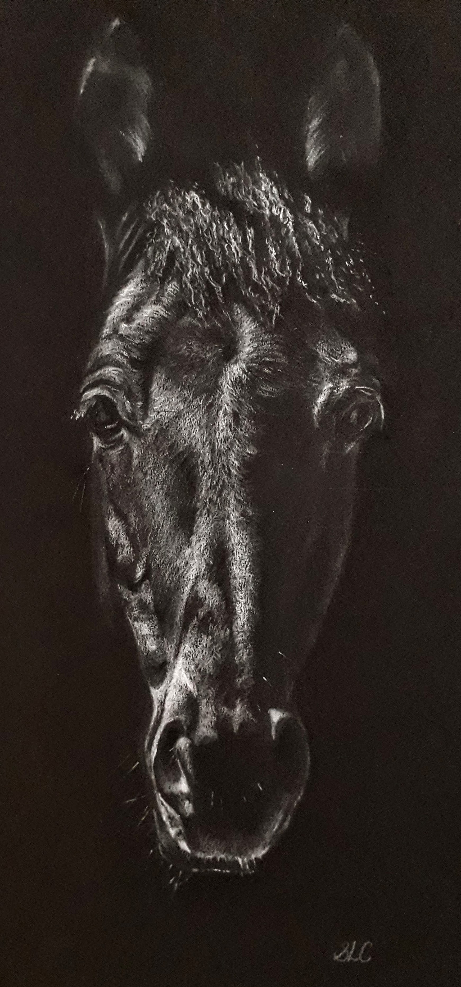 Horse in Shadows