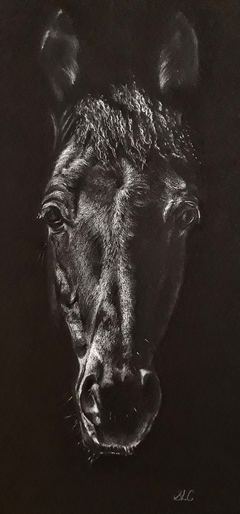 Print of original drawing of a horse by Sarah Caisey