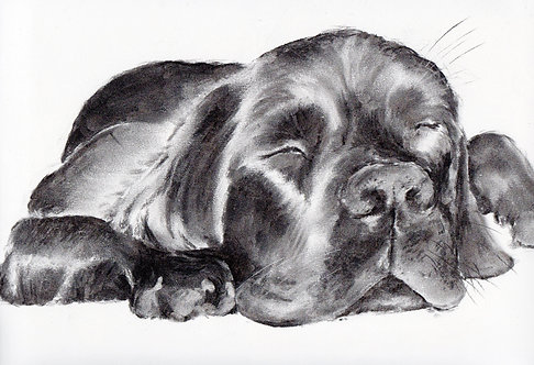 Print of a charcoal drawing of a Labrador y Sarah Caisey