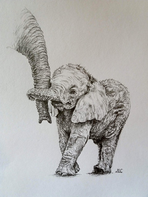 Blank card. Baby elephant holding mum's trunk. Print of drawing by Sarah Caisey