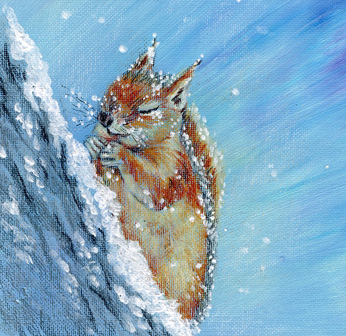 Blank card. Red squirrel in the snow. Print of original drawing by Sarah Caisey