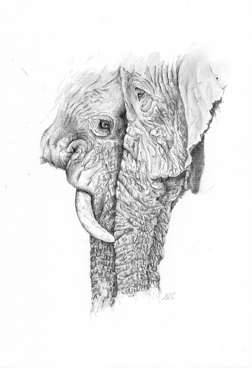 Print of original drawing of an elephant couple by Sarah Caisey