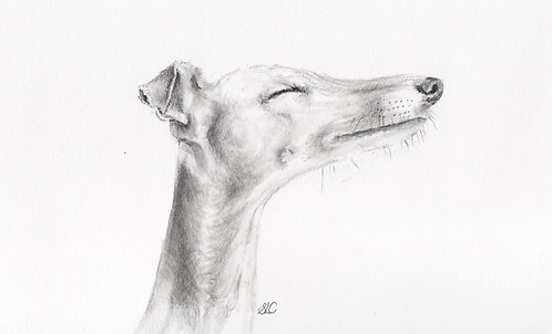 Original drawing of 'Happy' the Greyhound