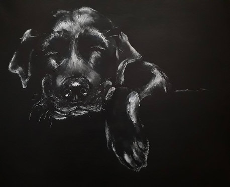 Print of original painting of a sleeping Labrador by Sarah Caisey