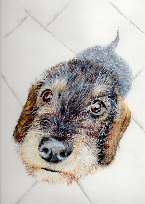 Print of original drawing of a Dachshund by Sarah Caisey