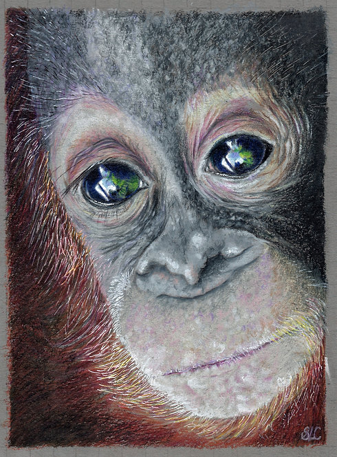 Original drawing of a baby Orangutan