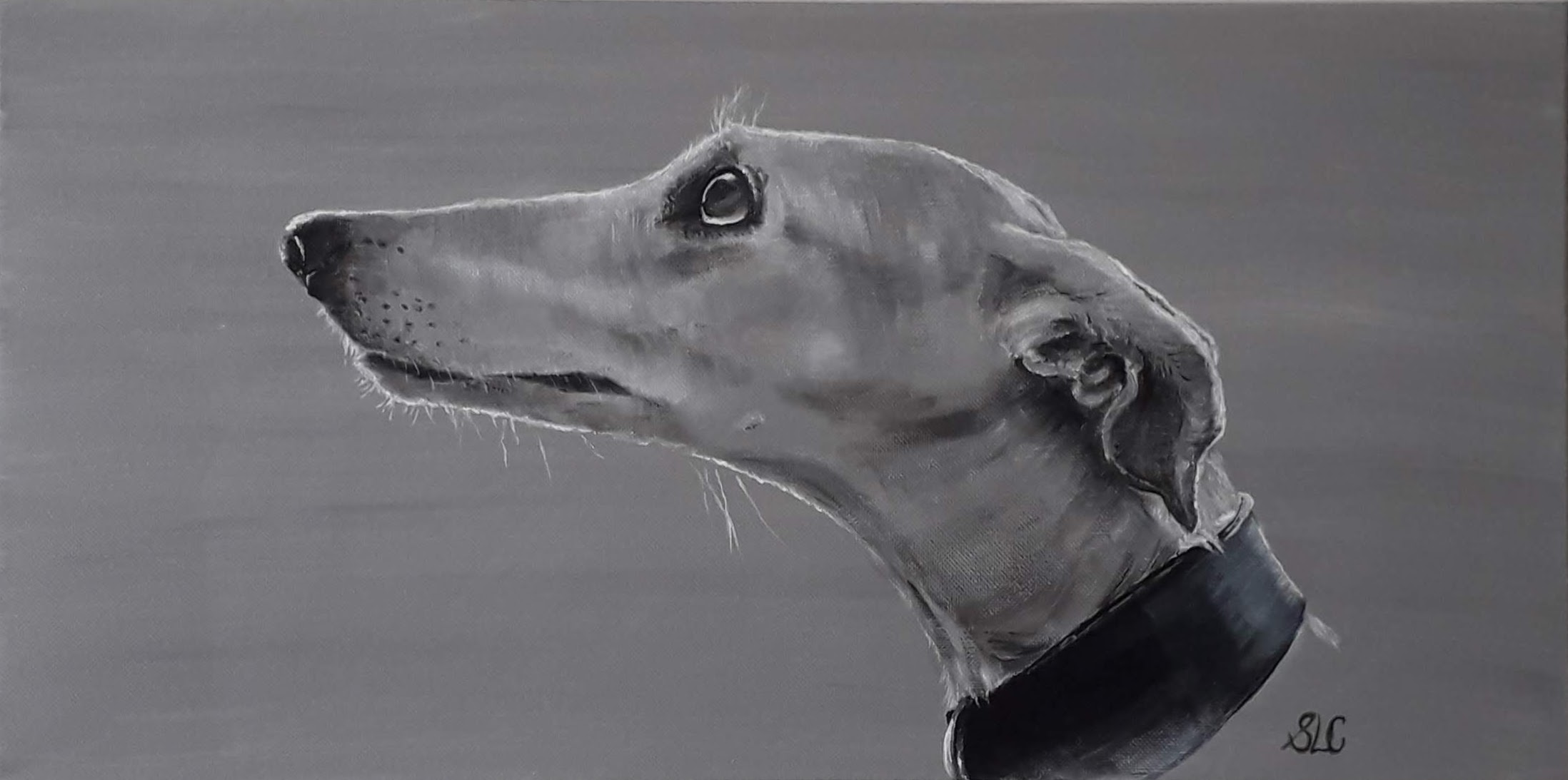 Pale Greyhound