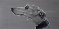 Pale Greyhound
