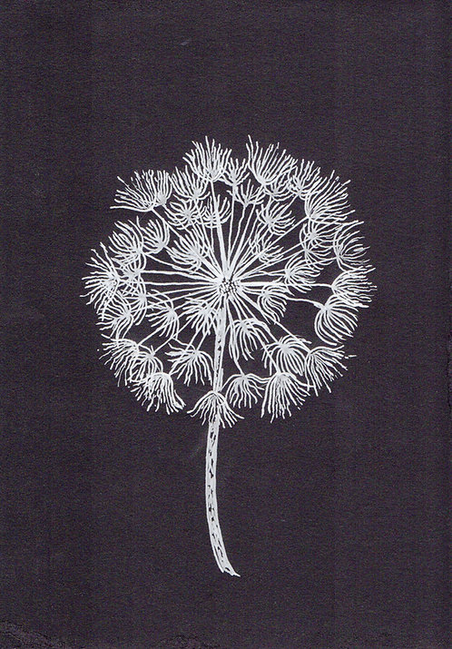 Blank card. Black and white dandelion. Print of original picture by Sarah Caisey