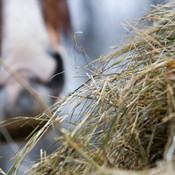 foin alimentation cheval