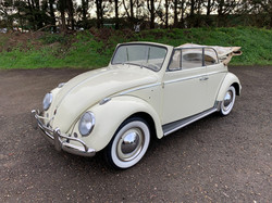 white beetle for sale