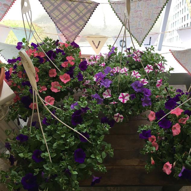 Petunia Hangers