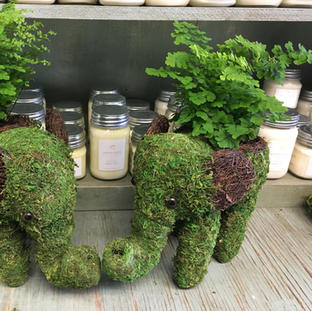 Elephant Moss Planters