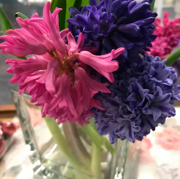Hyacinth Stems