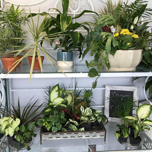 Assorited Plants