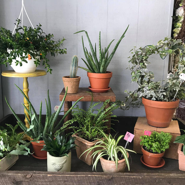 Our Potting Table Plant Collection