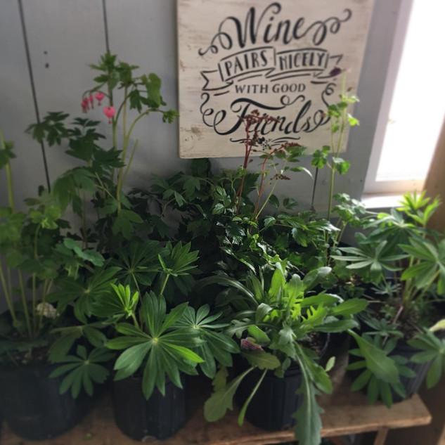Assorted Perennials