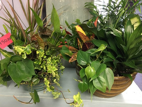 Dish Gardens $50 and $65
