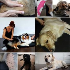 Hundeosteopathie und Hundephysiotherapie