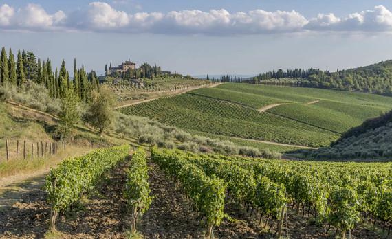 colline-chianti-degustazione-vino-vigneti