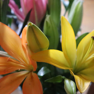 Assorted colored Lily's