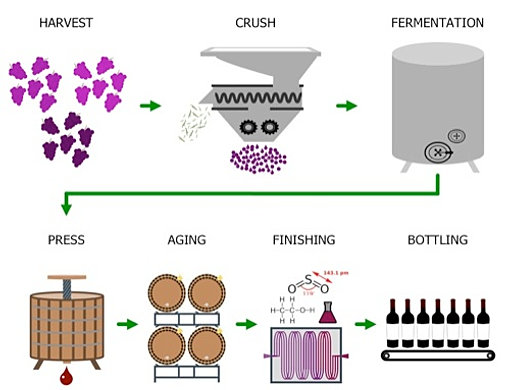 freedomwinecompany | Wine Making Process