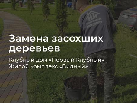 Замена засохших деревьев